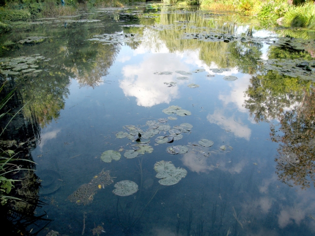 giverny-waterlilies-photo