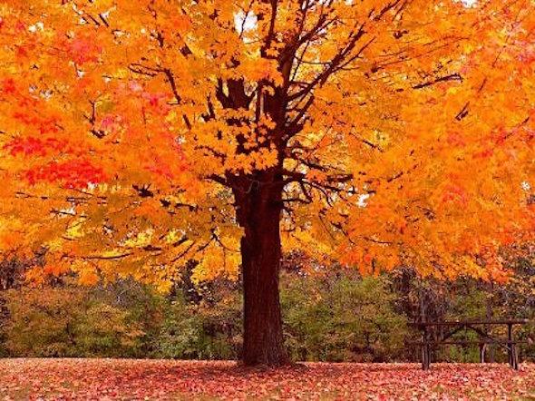 fall-tree-11