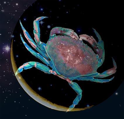 crab-composite2